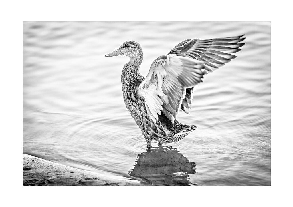 006 Free bird, Copenhagen, a3 print on Canon Premium Fine Art Smooth paper (Hahnemuhle 100% Cotton Rag 310g), printed on Canon Pixma Pro-1